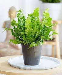 plants for office space. beautiful office this office desk plant requires minimal watering and soil which means  taking up less space on your desk just remember to keep soil moist place the  in plants for office space