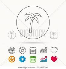 Download Palm Chart Palm Tree Coconuts Vector Photo Free Trial Bigstock