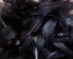 Black Feather Wallpapers - Top Free ...