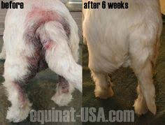 treating a dog suffering from severe allergies boston terrier skin problems natural treatment allergies dog and doggies