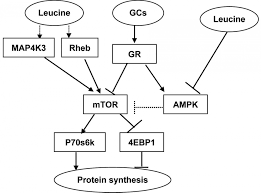 Protein Synthesis Flow Chart Key Biology Codon Chart