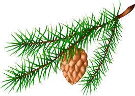 Cedar Tree Stock Vector Illustration and Royalty Free Cedar Tree Clipart