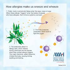 Allergy Library | AAAAI
