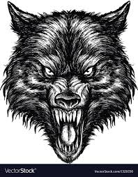 Drawn Wolf Hand Drawn Wolf Linework Royalty Free Vector Image