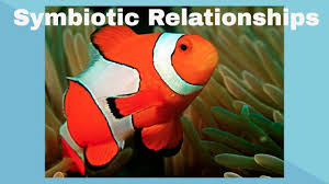 symbiotic relationships examples of symbiotic relationships youtube