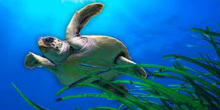 Giornata mondiale degli Oceani 2021: cos'è?