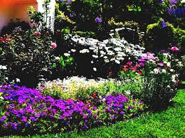Small Picture Creative Wildflower Garden Design Style Home Design Contemporary
