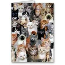 cats collage wallpaper. Wonderful Wallpaper Cat Collage Card For Cats Wallpaper E