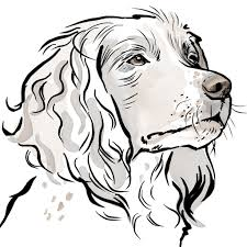 dog pictures to print. Beautiful Pictures Scribble Print Studio Dog Breeds Personalised Springer Spaniel  Throughout Pictures To