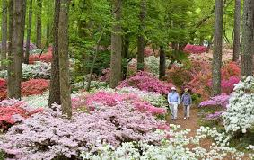 join gwa in beautiful pine mountain ga for an amazing visit to the beautiful callaway gardens and hills dales estate enjoy special garden tours
