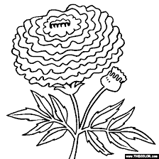 f9ead4ecee5bcc4d03ee8fe6ea8fc800 marigold flower coloring page tagetes coloring projects to try on science fair project flowers food coloring