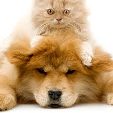 Image result for Picture of a pet at the vet