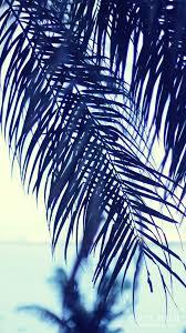 オシャレなiphone壁紙ヤシの木ごしに眺める夏の海のiphoneスマホ