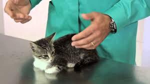 Resultado de imagem para gripe em gatos