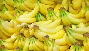「香蕉栽培」的圖片搜尋結果