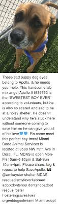 These Sad Puppy Dog Eyes Belong To Apollo He Needs Your Help This