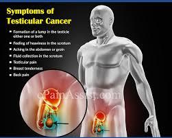 testicular rupture symptoms. testis pain treatment testicular rupture symptoms a