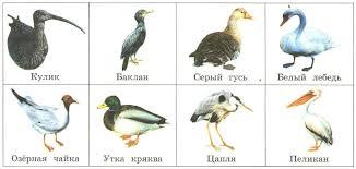 Разнообразие птиц Оседлые и перелётные Размножение забота о  Водные и околоводные птицы кулик баклан серый гусь белый лебедь озёрная чайка утка кряква цапля пеликан