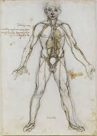Organs In The Human Body List Of Organs Of The Human Body Wikipedia