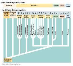 Five Kingdom Classification Chart Five Kingdoms Vs Three Domains