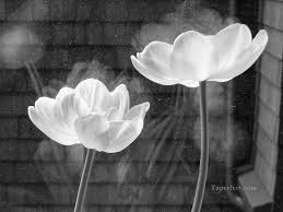 xsh498 black and white flowers painting