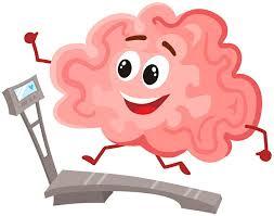 「脳神経と構造機能」の画像検索結果
