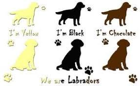 Labrador Color Chart Labrador Coat Color Chart Kacazuso99 Over Blog Com