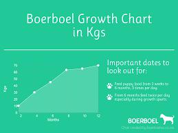 Boerboel Growth Chart In Kgs Boerboels
