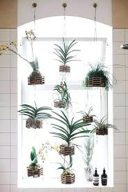 indoor wall plant holders hanging plant stand indoor hanging wooden plank plant holders indoor hanging plant