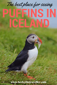 puffins in iceland the best place for seeing puffins in iceland for all wildlife