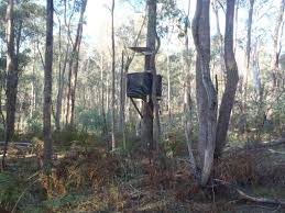 a deer stand up in a tree in the woods built from a free deer stand