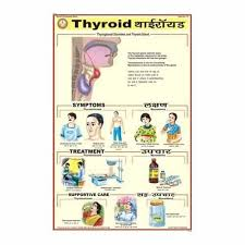 Thyroid Chart Thyroid Charts View Specifications Details Of Medical