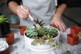 Succulent Pot Design How To Make An Easy Succulent Container Garden