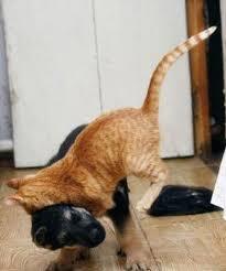 puppy and kitten fighting. Exellent Kitten Puppy And Kitten Fight Inside Fighting O