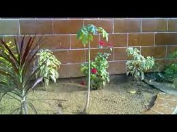 Small Picture Small Home Garden Karachi Pakistan YouTube