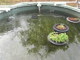Self Cleaning Fish Tank Garden Jerry Aquaponics Glass Fish Tank