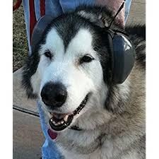 Explore Headphones For Dogs Amazon Com