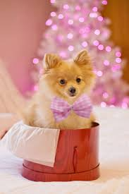 All wallpapers are optimized for android phones. Christmas Dog Wallpaper Cute Christmas Dog 1920x2880 Download Hd Wallpaper Wallpapertip