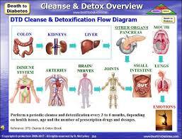 How To Detox To Reverse Type 2 Diabetes Ex Diabetic Author
