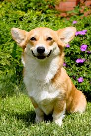 Image result for happy animal