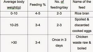 The Aquaculturists 22 01 2015 Feed And Feeding Practices