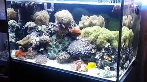 Aquario marino 240litri 9 3 2013 youtube