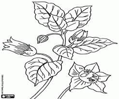 Kleurplaten Planten En Bladeren Kleurplaat