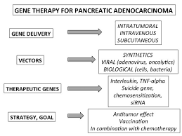 ijms full text gene therapy for pancreatic cancer  this is an open access article distributed under the creative commons attribution license which permits unrestricted use distribution and reproduction in