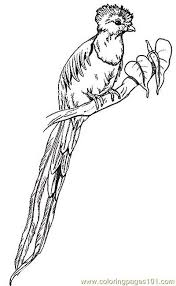 Small Picture Umbrella Bird Coloring Page Miakenasnet