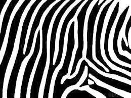 Small Picture Amper Bae zebra print backgrounds