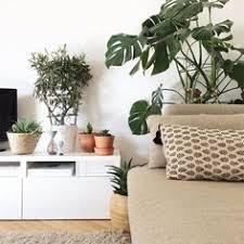 550 Best urban <b>jungle</b> images | Plants, Planting flowers, Greenery