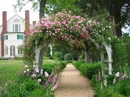 rose arbor with pink thousand beauties climbing rose
