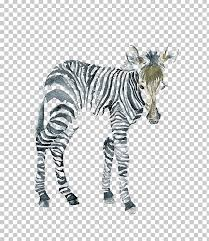 the art of painting zebra watercolor painting canvas png clipart animal animals art black and white