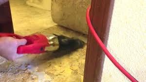 how to remove linoleum flooring removing linoleum flooring how to remove glued linoleum from wood floor